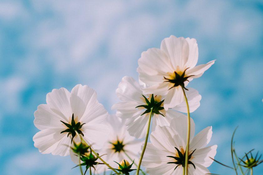 spring time_3