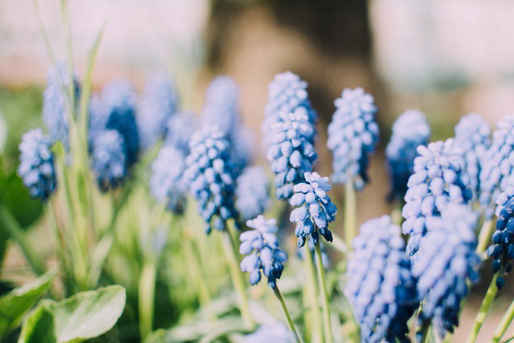 spring time_5