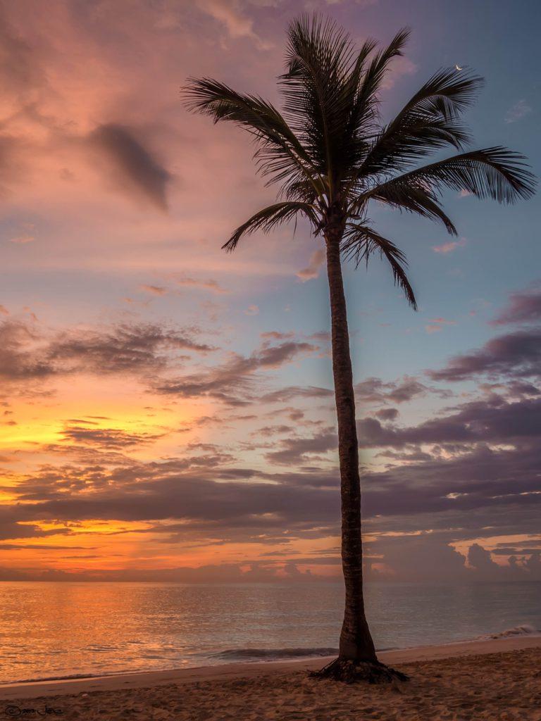 californian beach palms