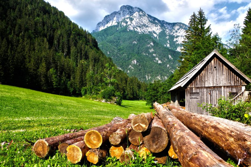 montagna paesaggio tronchi